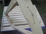 Bee box wax frame's wires twisted rather than nailed