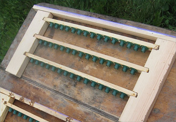 Queen cups for honeybee larva grafts on bars on a frame