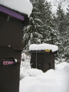 Snow atop Wrapped bee hives at Brookfield Farm Bees And Honey, Maple Falls, WA