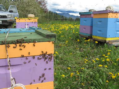 Spring Frog Farm: Happy home for some Brookfield Farm bee hives