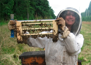 Queen Cells Grafted by Beekeeper Karen Bean of Brookfield Farm Bees And Honey, Maple Falls, WA