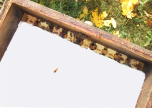 Close shot of insulation on top bars of bee hive at Brookfield Farm Bees And Honey, Maple Falls, WA