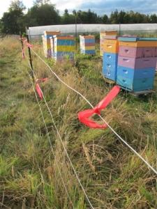 Flagged Bear Fence at for Brookfield Farm honey bees at Spring Frog Farm, Washington