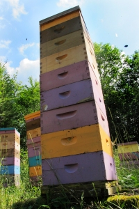 Tall Bee Hive at Brookfield Farm Maple Falls Washington